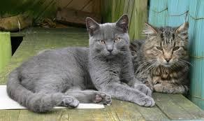Katze Schlafzimmer Ja Bett Nein Bisherige Gäste Katzen