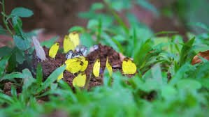 Decorative Frogs Decorative Frogs Among The Flowers Spring And Easter Background