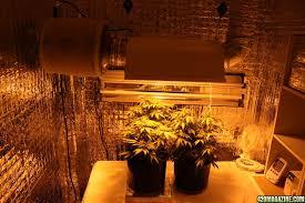 400 Watt Hps Grow Light Dankykush Aurora Indica 400 Watt Hps Daily Updates Advice Wanted