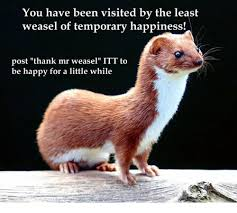 Weasel Meme - you have been visited by the least weasel of temporary happiness