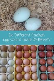 video do different chicken egg colors taste different raising