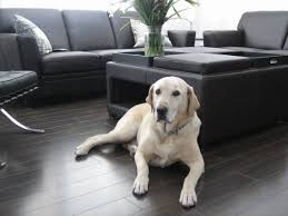 Best Wood Laminate Flooring Choosing The Best Type Of Flooring For Dogs And Their Owners