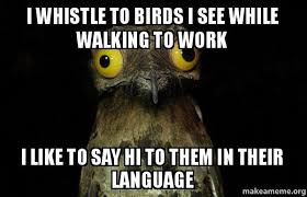 Whistle Meme - i whistle to birds i see while walking to work i like to say hi to