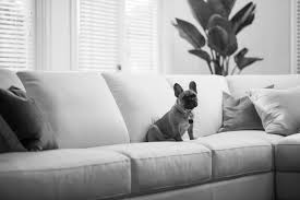 Sofa King Advert by Plush Sofas Invites Dogs Onto The Couch In New Comfort Campaign