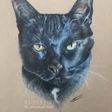 baby kitty illustrations shannagh leigh
