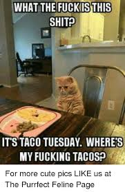 What The Fuck Is This Meme - what the fuck isthis shit it s taco tuesday wheres my fucking