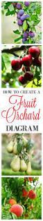 100 best orchards u0026 fruits images on pinterest fruit garden