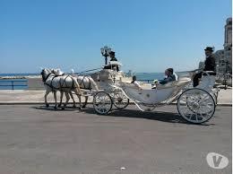 bianchi carrozze noleggio carrozze con cavalli bianchi per matrimoni bari