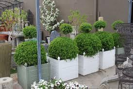 topiary plants dirt simple