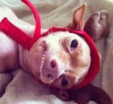 Tuna The Dog Meme - tuna the dog 8 pics tuna aka phteven pinterest ugly dogs