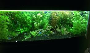 national geographic aquarium light led light for aquarium plants national geographic led aquarium light