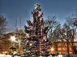 the brightest christmas trees and christmas lights on the web