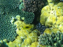 free image of coral colours