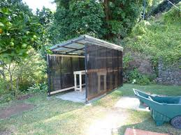 Shed Greenhouse Plans Jank Access Shed Roof Greenhouse