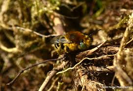 solution manual even numbers james stewart 7th solitary bees have a pr problem wildlife articles