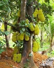 vegetable tree manufacturer from moradabad