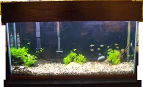 plants for low light low maintenance 55g general aquarium