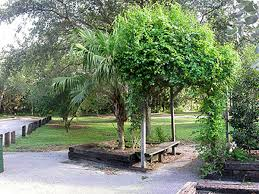 miami u0027s 20 best secret gardens parks and green spaces mapped