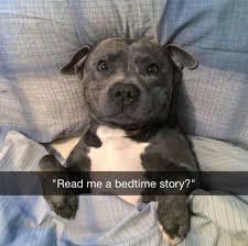 Bedtime Meme - read me a bedtime story dog memes