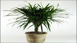 100 good indoor plants for low light how to repot