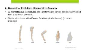 comparative anatomy worksheet images learn human anatomy image