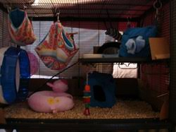 Best Bedding For Rats Cages And Bedding Rockabye Rattery