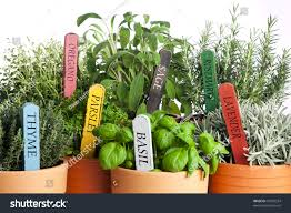 garden design garden design with three easy to grow herbs in your