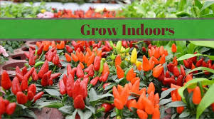 indoor planting 7 indoor planting ideas for city dwelling plant lovers nourish