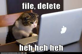 Cat Laptop Meme - lolcats laptop page 3 lol at funny cat memes funny cat
