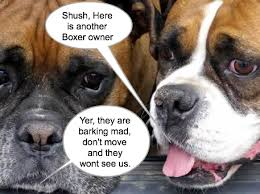 Funny Boxer Dog Memes - boxer dog lovers guest book
