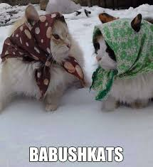 Cat Meme Ladies - babushkats hilarious cat memes pinterest hilarious and memes
