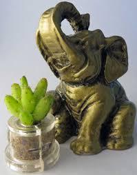 amazon com apple cactus live cacti terrarium flower boo boo