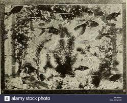 best fan for aquarium a well planted aquarium anacharis canadensis gigantea elodea a