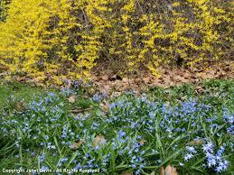 native plant sale muskoka conservancy perennials janet davis explores colour page 4