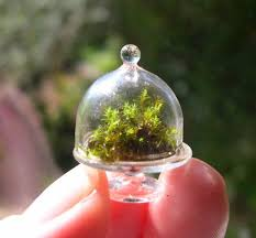 276 best terrarium images on pinterest fairy gardens miniature