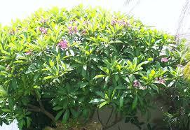 flowers florida style