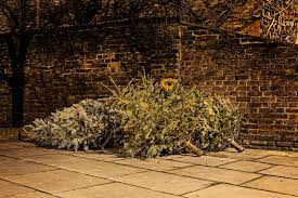 christmas tree disposal christmas tree disposal 2015 see u2026 flickr