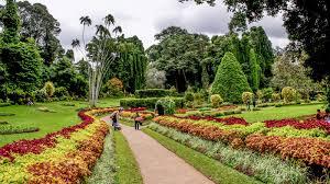 Bermuda Botanical Gardens Peradeniya Botanical Gardens Kandy Andbeyond