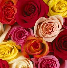 Wholesale Roses Wholesale Flowers Las Vegas Wedding Flowers Bulk Flowers