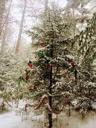 in new hshire decorating trees in the woods is a