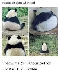 Sad Animal Memes - pandas sit alone when sad follow me for more animal memes being