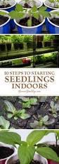 best 25 seed starting ideas on pinterest grow lights growing