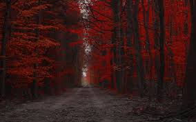 red forest nature path trees landscape fall dirt road