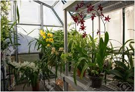 backyards impressive pacific greenhouses 147 small backyard