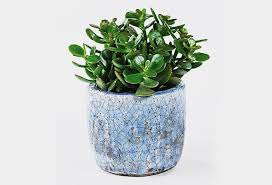 best plant for office desk plants will bring life to your office cool material