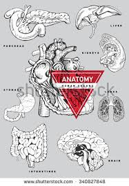 Anatomy Of Stomach And Intestines Vector Hand Draw Intestines Stomach System Stock Vector 351037208