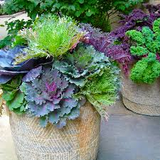 midwest gardening flowerpots for fall