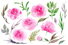 peony flowers watercolor pink peony flowers 19 png by watercolorflowers