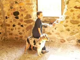 jogging with australian shepherd noon ball busters
