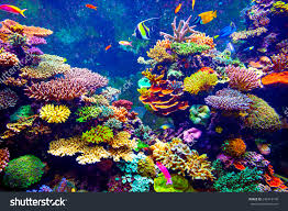 coral reef tropical fish sunlight singapore stock photo 243413140